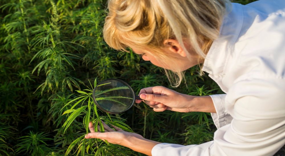Best CBD Oil for Women: Complete Reviews with Comparisons [2020]